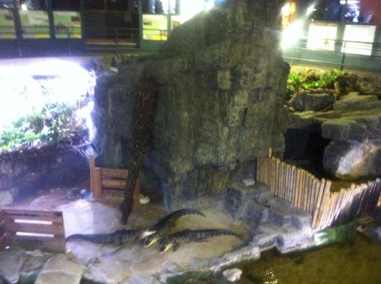 poisson licorne picture of aquarium tropical de la porte doree tripadvisor
