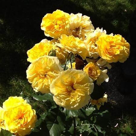 Cremeria Corradini : corradini's roses