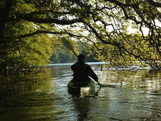 Encounter Cornwall: Paddling under the Trees