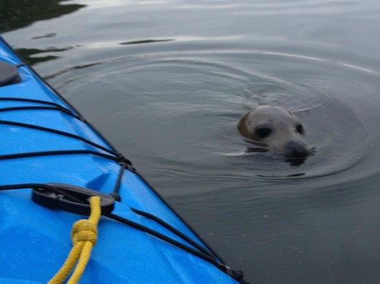 Encounter Cornwall: Seal Encounter