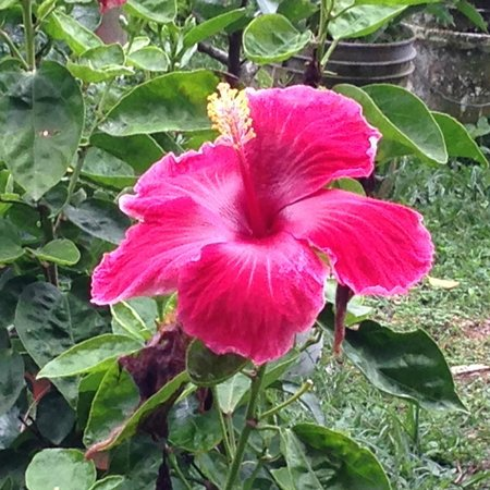 El Nispero Zoo and Botanical Garden : Lovely flower (1)