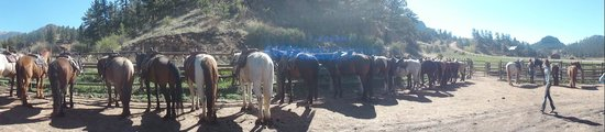 Tarryall River Ranch: Beautiful and Excellent riding horses