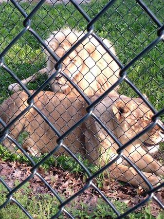 Nemacolin Woodlands Resort & Spa: The Lions...