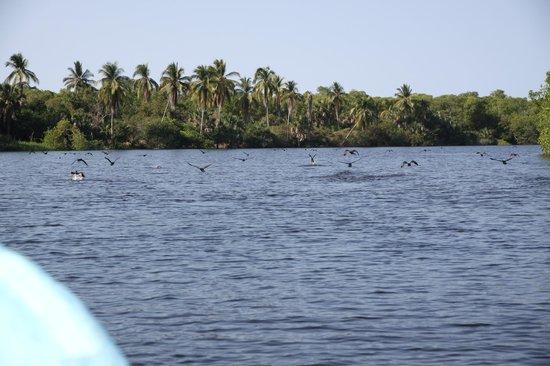 Laguna de Manialtepec: On the Manialtepec Lagoon