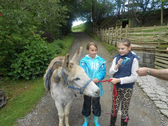 North Hayne Farm Cottages: Helping with grooming