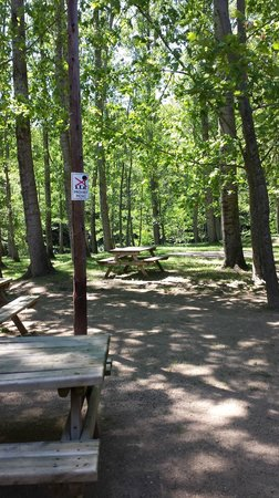 EL Moli D'en Robert : Trees around, good space to play