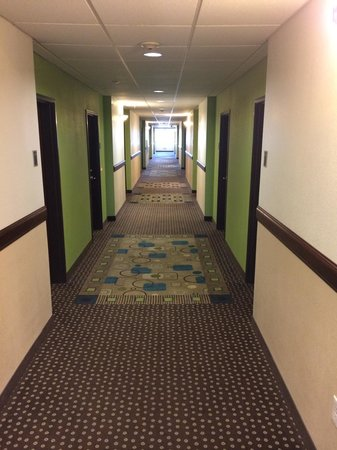 Best Western Douglas Inn & Suites: Hallways with new carpet.