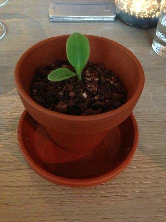 Gogärtchen: Der Blumentopf