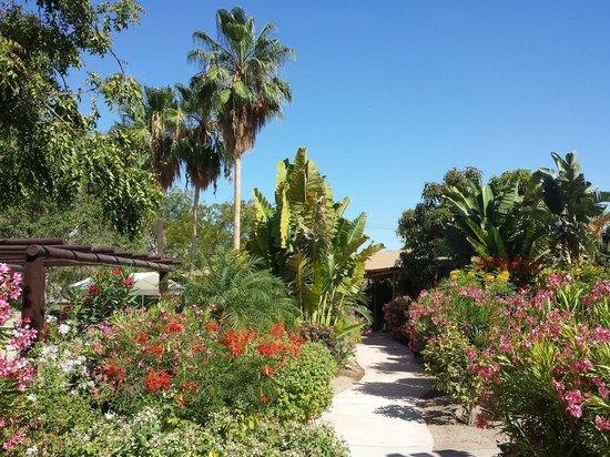 Hotel Tripui : Palm trees