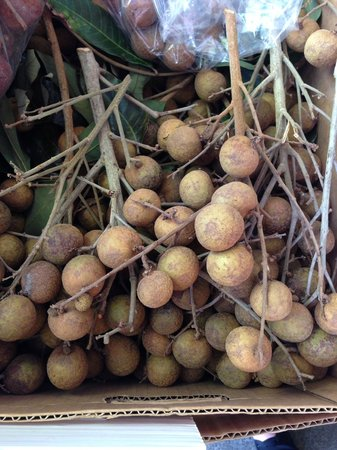 Hawaii Food Tours : Longan - tasted like a Honeydew melon