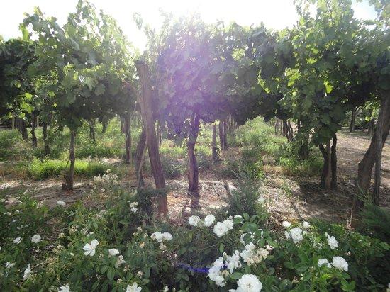 Cavas Wine Lodge: A walk through the wineyard