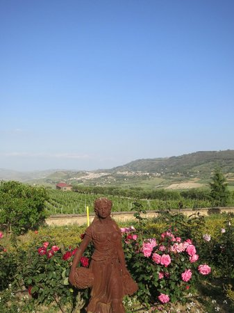 """Agriturismo Gigliotto: View from """"our wine terrace""""... you must spend your afternoon here"""