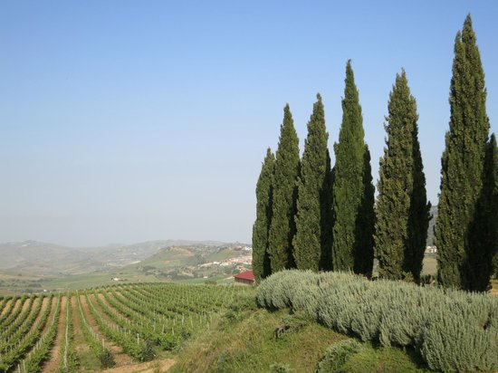 "Agriturismo Gigliotto: View from ""our wine terrace"""