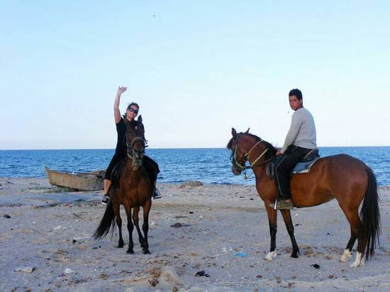 Medina Belisaire & Thalasso: I booked an hour and a half horse ride along the beach. Approx £20 again well worth the money.