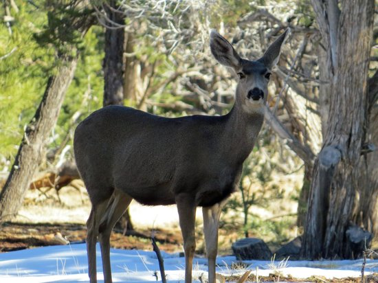 Walnut Canyon National Monument : Deer everywhere