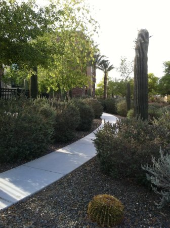 Homewood Suites by Hilton Phoenix Chandler Fashion Center: Landscaping and walkway on side of hotel
