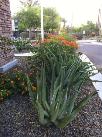 Homewood Suites by Hilton Phoenix Chandler Fashion Center: Desert landscaping