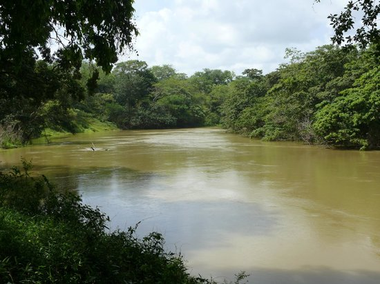 Howler Monkey Resort: View from River Cabin
