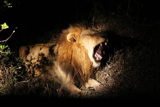 Savanna Private Game Reserve : Amazing sighting on the night game drive