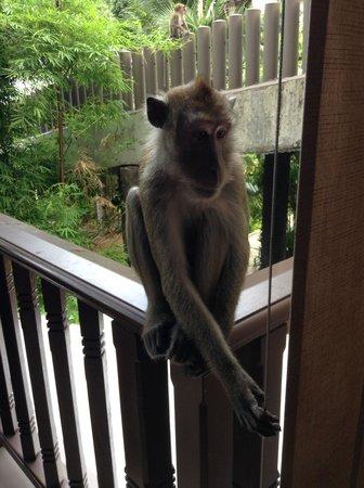 Centara Grand Beach Resort & Villas Krabi: Monkeys on our deck