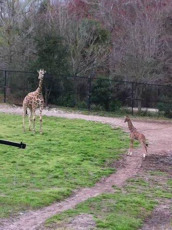 Jacksonville Zoo & Gardens : Feel the love!!!