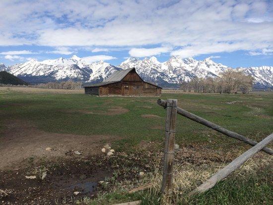 Wildlife Expeditions of Teton Science Schools: Mormon Row