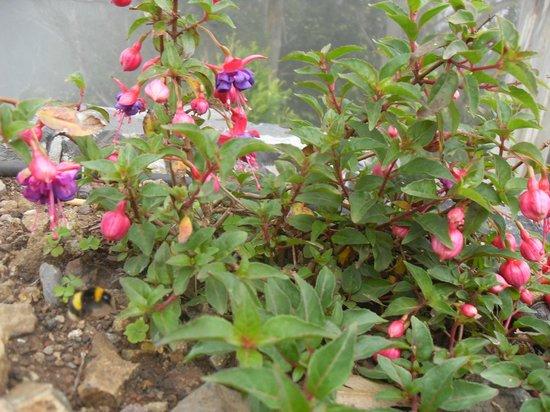 Cabo Girao : flores en lasalturas