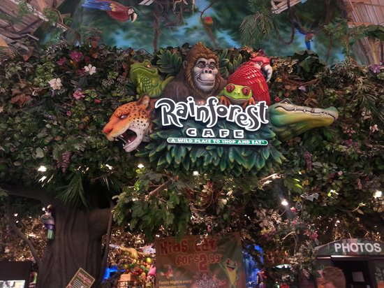 Rainforest Cafe Arizona Mills Menu Prices