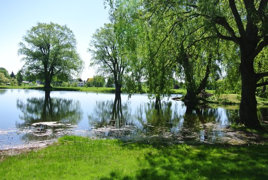 The Chalet of Canandaigua: The pond in spring