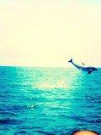 Blue Wave Adventures: Perfect timing!Another member of the tour took this picture & we did not expect the dolphin to j