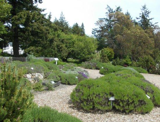 Pelindaba Lavender Farm: Lavender Farm