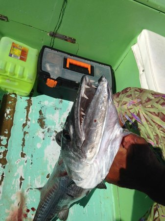 Sport Fishing Center Isla Mujeres: teeth