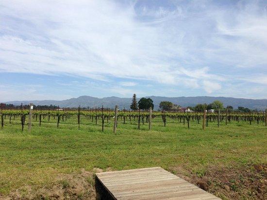 O'Brien Estate Winery: Fields