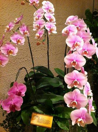 Shangri-La Hotel Bangkok: Arreglos con Orquídeas