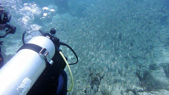 Octopus Diving - St Maarten