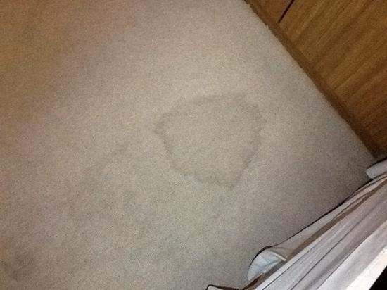 Weston Suites Hotel: Los pisos con alfombra sucia y manchada !