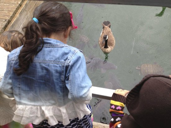Floating Cafe: Feeding the turtles, fish and geese