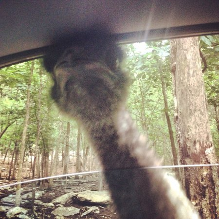 Harmony Park Safari: Oh oh! Emu in the car!