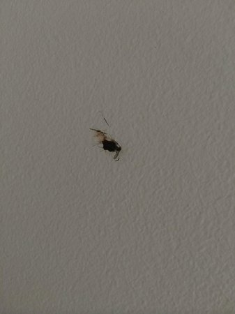 Lotus Blanc Resort : Before we changed rooms - dead mosquito on wall which we found!