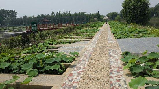 Sihong county, จีน: 很漂亮的地方