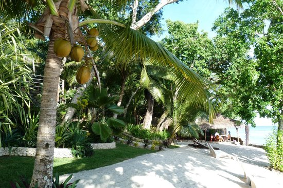 Paradise Cove Resort : garden path and bungalow