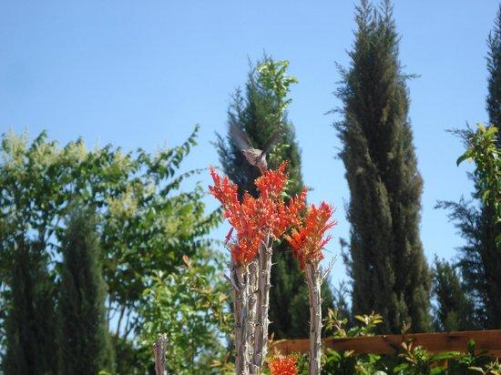 Safari Motor Inn - Joshua Tree: Bird in Courtyard in Summer