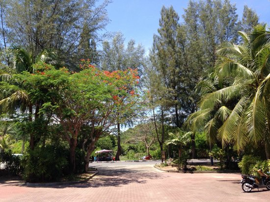 Tropical Resort: Hotel