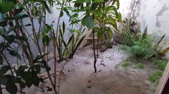 Villa Almarik Resort Lombok: giardino in stanza