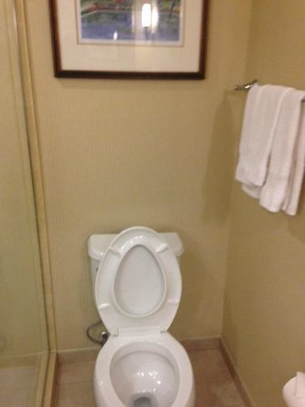 Hilton St. Louis Frontenac: The awkard toilet. If the door was open it would close the toilet in.. no access