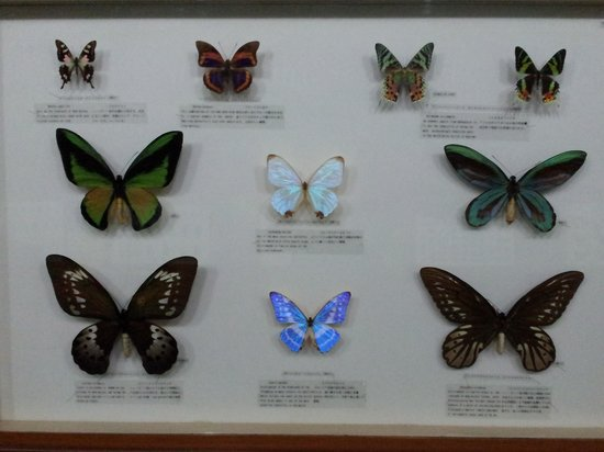 Butterfly Park & Insect Kingdom: Beautiful Display of Butterflies.