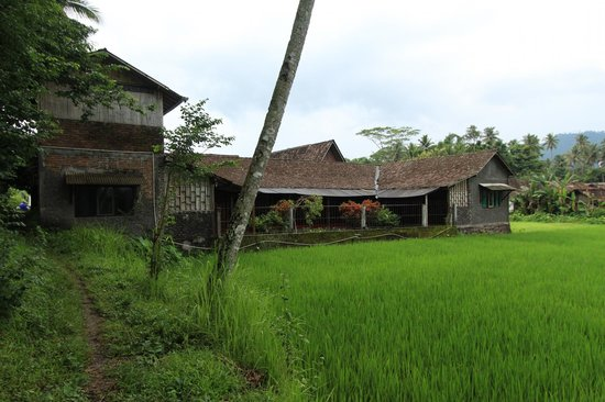 Hotel Rajasa: From the patty fields