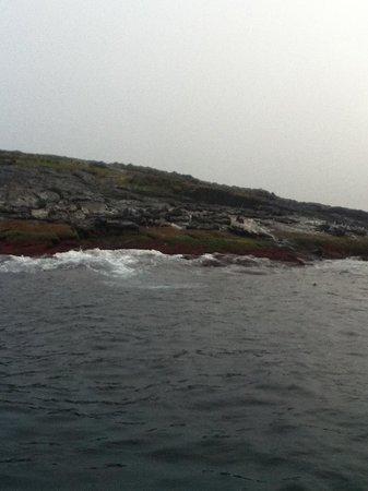 Montague Island: Seals