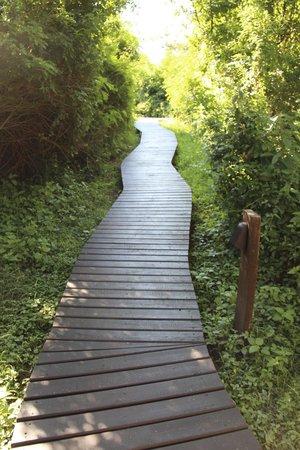 Lion Sands River Lodge: Walking path