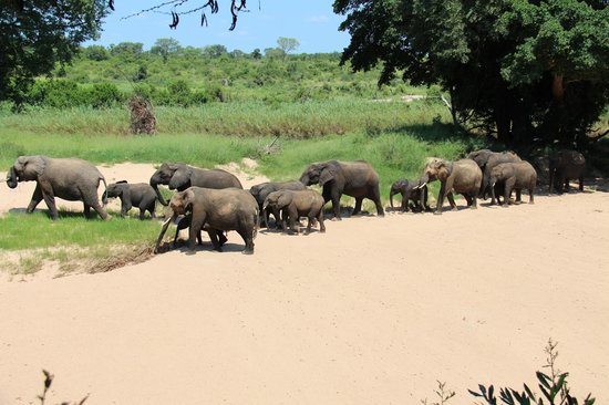 Lion Sands River Lodge : Elephants walking by as we ate lunch